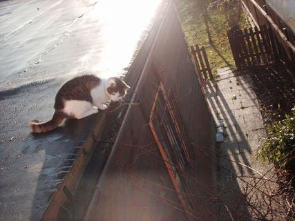 FOTKA - Ránní procházka Nelly po střeše, 20.11.2009.