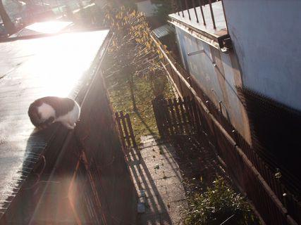 FOTKA - Serie : ránní procházky Nelly po střeše, 20.11.2009.