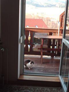 FOTKA - Serie : ránní procházky Nelly, návrat domů přes balkon- 20.11.2009.