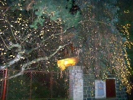 FOTKA - noční stromy