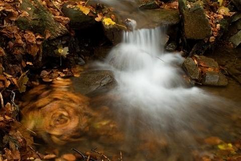 FOTKA - Podzim v pohybu