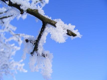 FOTKA - Mrazík
