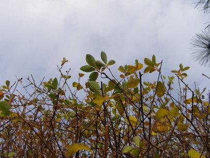 FOTKA - Podzim+