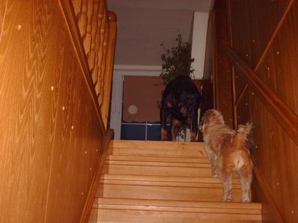 FOTKA - Serie : Roxy nechce pustit Aishu nahoru / 1 /  - 23.11.2009.