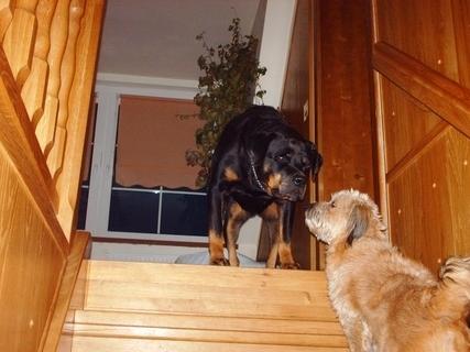 FOTKA - Serie : Roxy nechce pustit Aishu nahoru  / 2 /  - 23.11.2009.