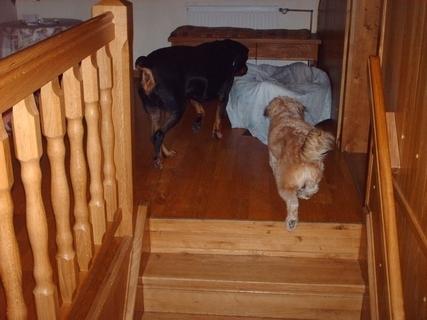 FOTKA - Kdo bude první v pelíšku Roxy? - 23.11.2009.