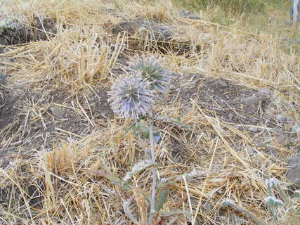 FOTKA - rostlinky na Lesbosu