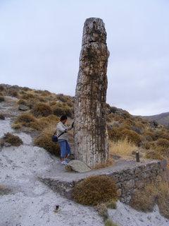 FOTKA - zkamenělý strom Lesbos