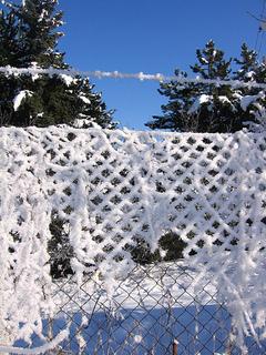 FOTKA - Omrzlý plot