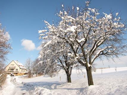 FOTKA - sluníčková zimní krajina