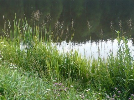 FOTKA - u rybníka.