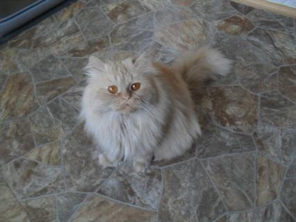FOTKA - Garfield v kuchyni