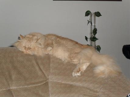 FOTKA - Tady spím taky rád