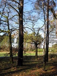 FOTKA - v borovým lese
