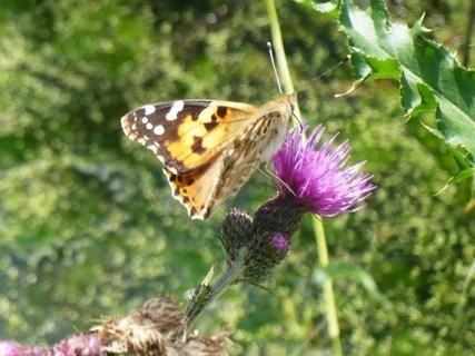 FOTKA - vzpomínka na léto - motýl