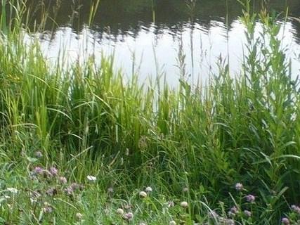 FOTKA - u rybníka v létě
