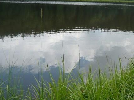 FOTKA - u rybníčka....