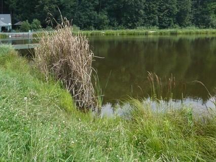 FOTKA - u rybníčka......