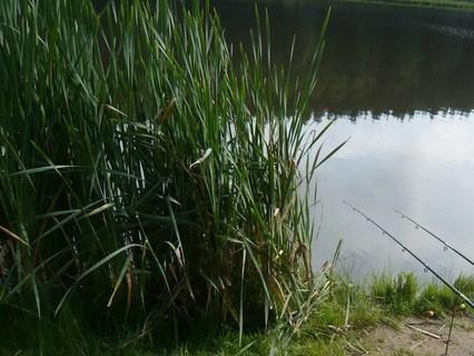 FOTKA - u rybníka.....