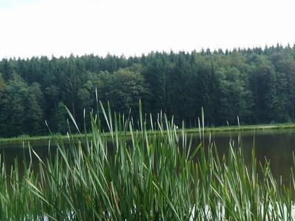 FOTKA - u rybníka.......