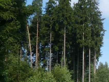FOTKA - lesík.
