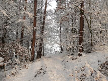 FOTKA - Krásná zima