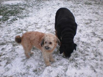 FOTKA - Roxy s Aishou na záhradě - 13.12.2009.