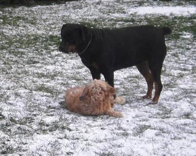 FOTKA - Roxy  s Aishou - hry na sněhu , 13.12.2009.