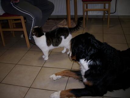 FOTKA - Náš pes a číča