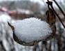 Sněhová lžička