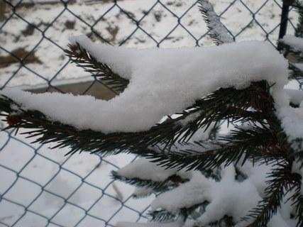 FOTKA - větvička se sněhem
