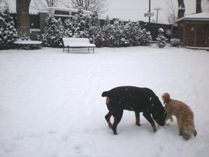 FOTKA - Roxy s Aishou dnes  na sněhu - 18.12.2009