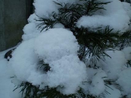 FOTKA - Nazdobený strom