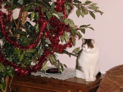FOTKA - Nelly dnes večer - 21.12.2009.