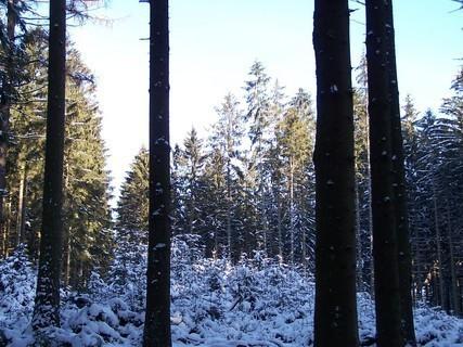 FOTKA - Zimní procházka lesem