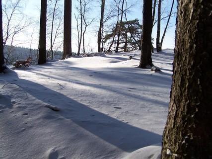 FOTKA - Zasněžený les