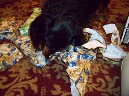 FOTKA - pes mi rozbaluje dárek...