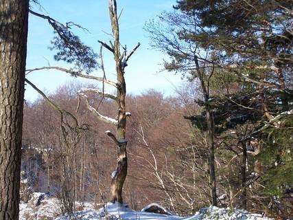 FOTKA - Zima v lese- prosinec