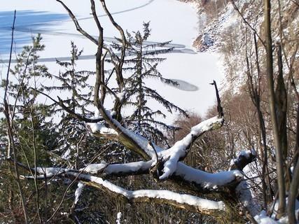 FOTKA - Stromy nad zamrzlou hladinou