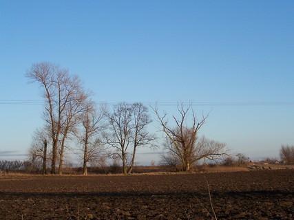 FOTKA - Moje oblíbené stromy v poli