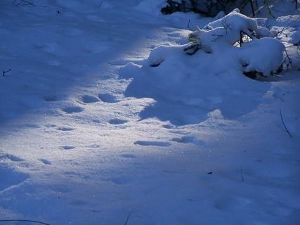 FOTKA - zapadající sluníčko do sněhu