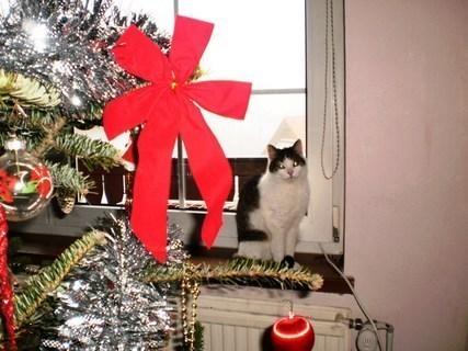FOTKA - Nelly a stromeček - 31.12.2009.