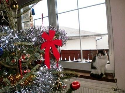 FOTKA - Dvoubarevné  oči  Nelly - 31.12.2009.