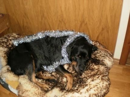 FOTKA - Ozdobená Roxy - 31.12.2009