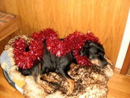 FOTKA -  Roxy  dnes na Silvestra  - 31.12.2009.