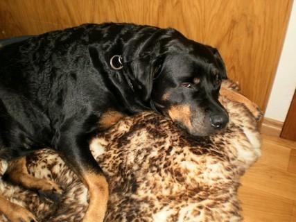 FOTKA - Roxy  si hoví - 31.12.2009.