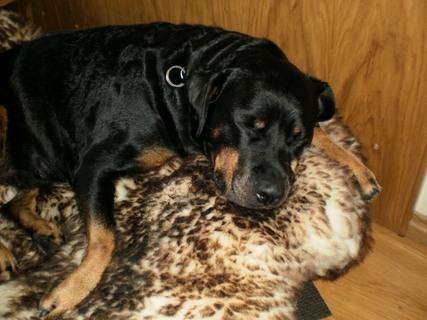 FOTKA - Roxy už spinká - 31.12.2009.
