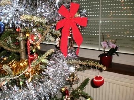 FOTKA - Vánoční stromeček a orchidea - 2.1.2010.