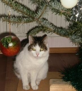 FOTKA - Nelly pod stromečkem - 2.1.2010.