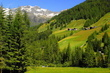 Tyrolské pastviny